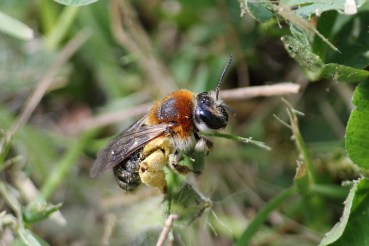 Mining Bees and Harlequins