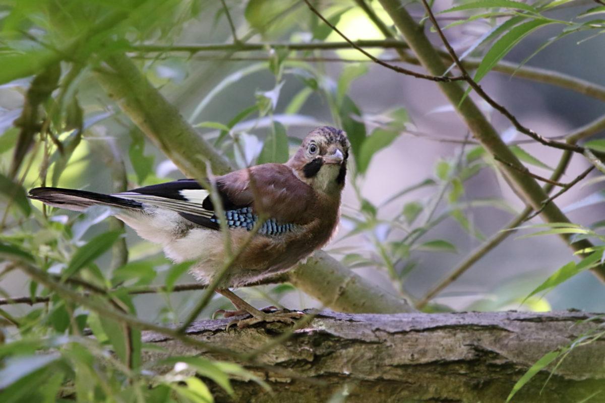 Denso Marston Nature Reserve June 2018